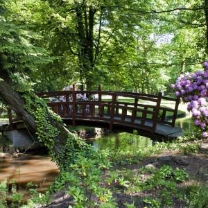 park, drewniany mostek, kwitnący rododendron