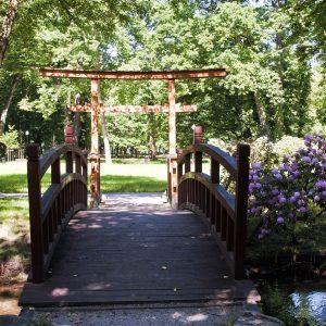 park na pierwszym planie drewniany mostek